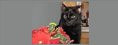 Rhubarb457's For Animal Charities