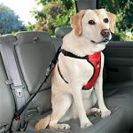 How to Buy a Safety Harness for Your Dog