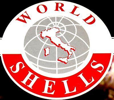 World Shells Italy