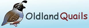 Oldland Quails