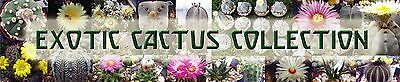 Exotic Cactus Collection