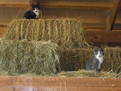 Barn Cat percussion