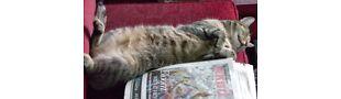 Feisty Cat's Stash