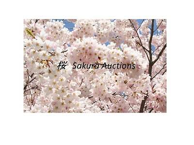 Sakura Auctions