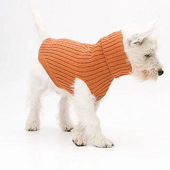 How to Buy Dog Jumpers on eBay