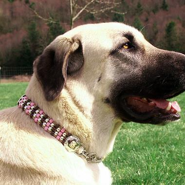 Your Guide to Buying Half Check Dog Collars