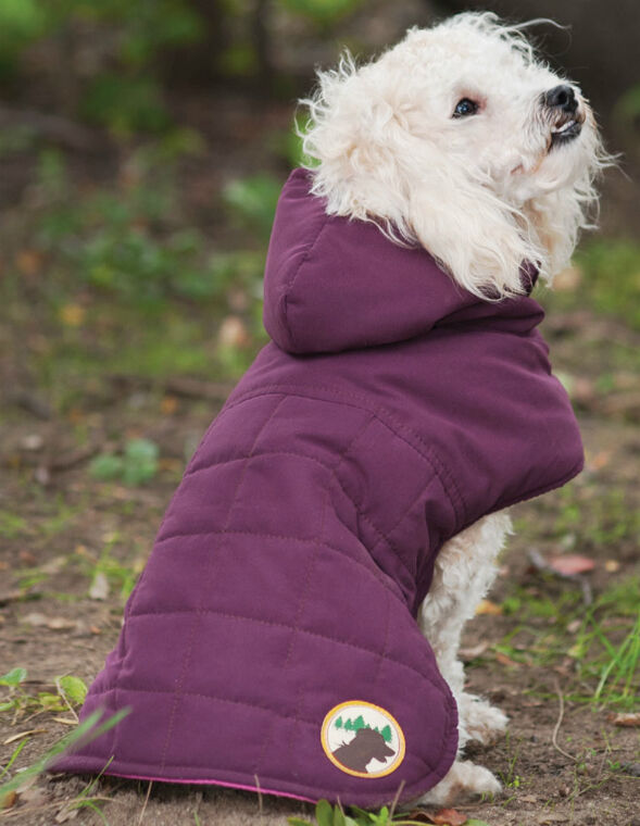 10 Essential Clothing Items for Your Dog