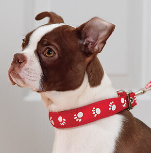 The Complete Guide to Buying Padded Dog Collars