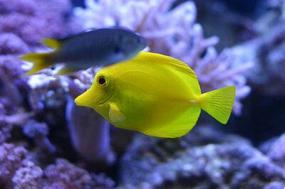 Delight Fish
