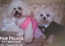 Paw Palace