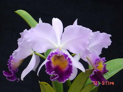 oceanvieworchids