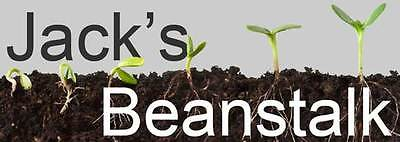 jacks-beanstalk
