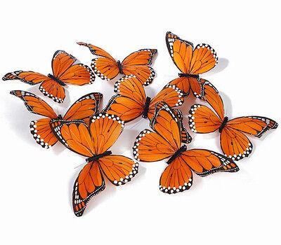 monarch shop