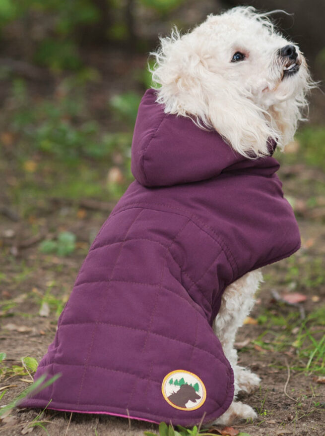 How to Buy the Correct Size Clothing for your Dog