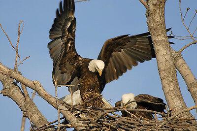 Eagle Eyes Nest