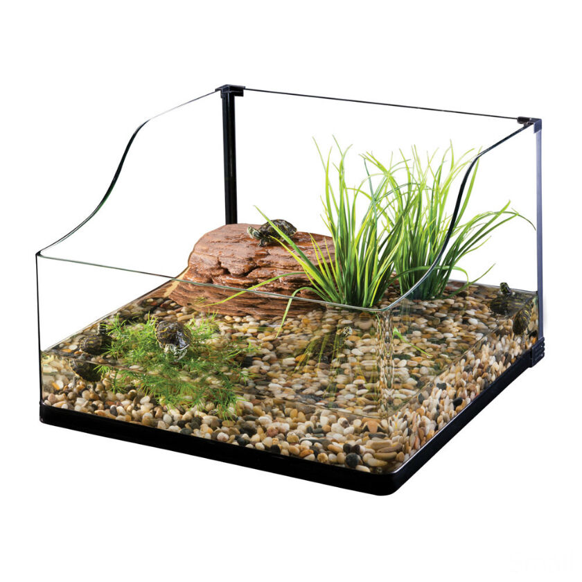 die richtige bepflanzung f r das terrarium finden ebay. Black Bedroom Furniture Sets. Home Design Ideas