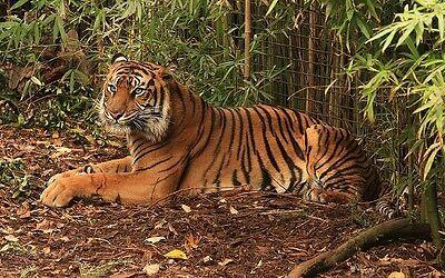 Tigres Treasure Trove