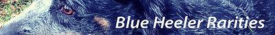 Blue Heeler Rarities