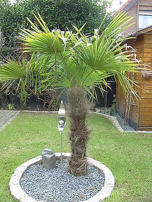 palmsprings4y
