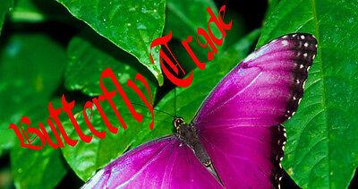Butterflytrade-Geschenke und mehr
