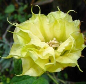 J&B Garden Treasures Seeds And More
