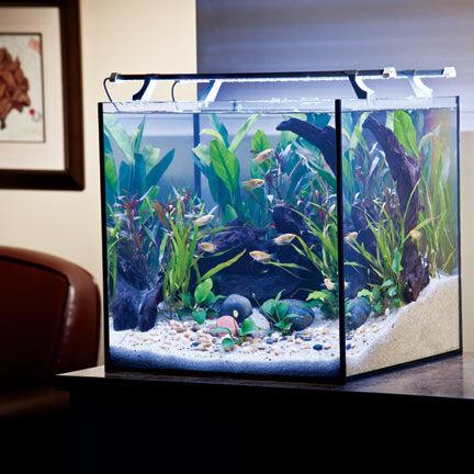 ratgeber aquarienzubeh r zuchtanlage dosierpumpe co2 flasche ebay. Black Bedroom Furniture Sets. Home Design Ideas