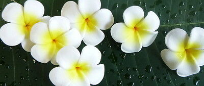 The_frangipani_tree