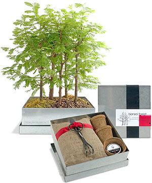 bonsai d nger welchen d nger brauche ich und wie oft sollte ich d ngen ebay. Black Bedroom Furniture Sets. Home Design Ideas