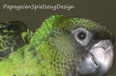 PapageienSPIELzeugDESIGN YOGIbaer