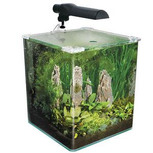 how to buy live plants for your aquarium ebay