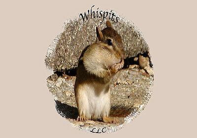 Whispits LLC