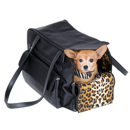 The Complete Guide to Buying a Dog Carrier