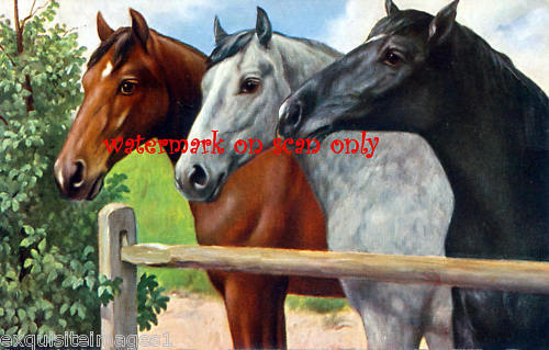Antique Art~Trio of Horse Profiles NEW Large Note Cards