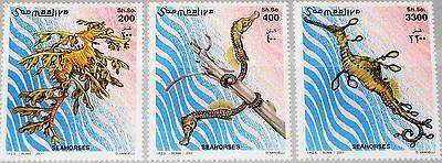 SOMALIA 2001 924-26 Seenadeln Pipefish Pipe Fish Fische Fauna Meerestiere MNH