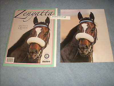 ZENYATTA  PHOTO & 56 Page BLOOD HORSE COMMEMORATIVE PROGRAM MINT GIFT CONDITION