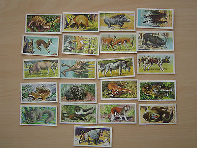 54 Brooke Bond - African, Asian and Vanishing Wild Life/Trees/Butterflies