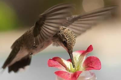 2 HAND HELD / WINDOW HUMMINGBIRD FEEDERS Silk Flower on a 4