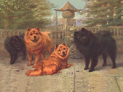 CHOW CHOW  GROUP OF OLD STYLE DOGS LOVELY DOG GREETINGS NOTE CARD