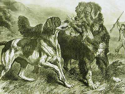 BIRD HUNTING w DOGS RETRIEVERS 1868 Antique Art Print Matted