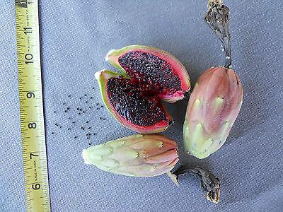 (500+ Fresh Organic Arizona Saguaro Cactus Seeds - Carnegiea Gigantea)