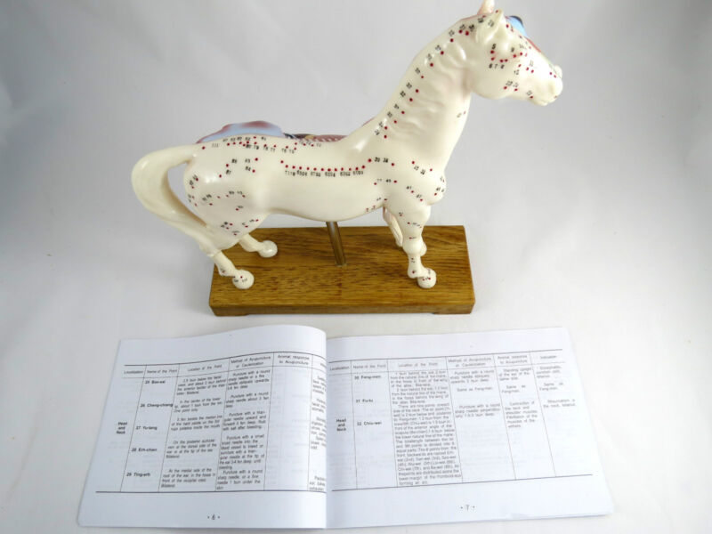 Professional Educational Acupuncture Horse Anatomy Medical Veterinary Model