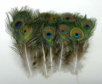 1,000 Stk Pfau Natürliche Federn 10.2-25.4cm Polster/Kostüm