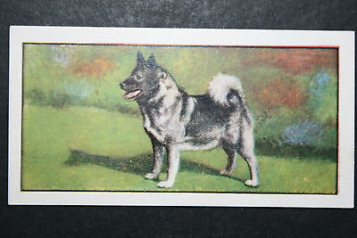 ELKHOUND   Early 1960's Portrait Card  # VGC