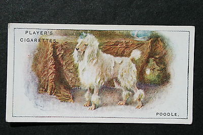 POODLE   Original 1920's Illustrated Card  ## VGC