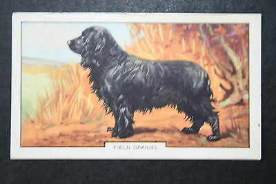 FIELD SPANIEL   Gun Dog   Vintage Colour Card  ## VGC