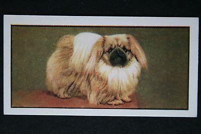 Pekingese   Vintage Colour Portrait Card # VGC