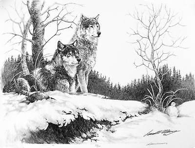 WOLF Wolves B/W grey pencil drawing Artist Signature Winter Northern fur quality