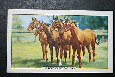 Yearling Race Horses  1930's Vintage Illustrated Card # VGC