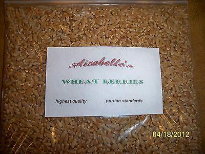 6000 Seeds High Quality Puritan Standard Wheat Berries CAT Grass 7.2 Ounces
