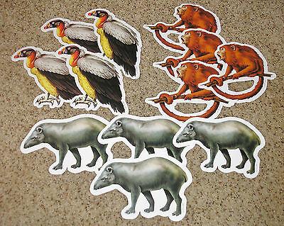Teacher Resource: 12 Jungle / Rainforest Animal Bulletin Board Accents (Jungle Bulletin Board)